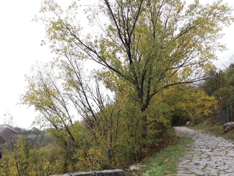 entorno_baños_de_montemayor_paisaje_valle_del_ambroz_otoño_mágico